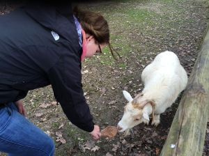 My new goat friend